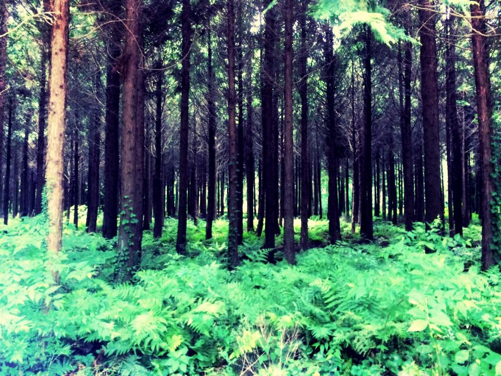 Wood No.1